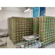 ivc racks, GM 500, Green Line, Tecniplast, individually ventilated racks