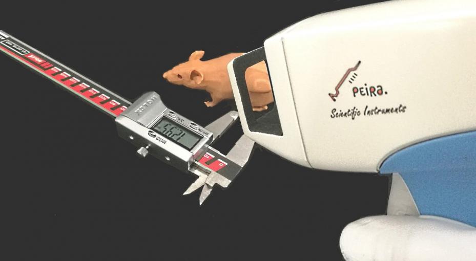 Képalkotás - 3D rögzítés és féknyereg a daganatok méréséhez laboratóriumi állatoknál